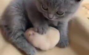 Little Kitten And It's Hamster Friend!