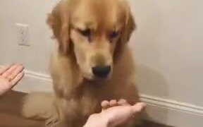 Doggo Gets Confused By Human's Tricks!
