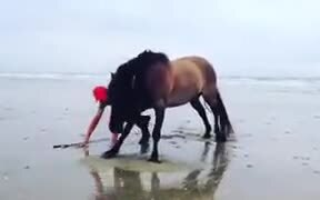 Horse Works Out With The Guy!