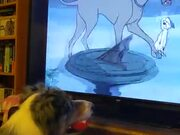Dog Just Enjoying A Scooby Doo Movie!