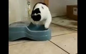 This Cat Loves Playing With It's Water