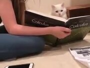 Cat Decided To Take Up A College Degree!
