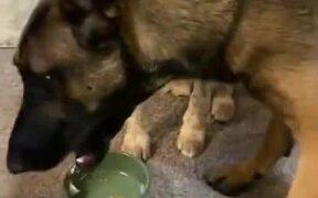 Dog Gets Really Sad After It's Cake Gets Stolen!