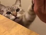 Cute Catto Gives High 5!