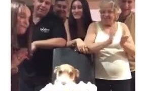 It's The Doggo's Happy Birthday!