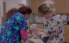 The Dog Doc Trailer