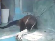 This Otter's Really Feeling The Beat!