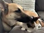 Cat Gets Amazing Clean Up From Dog!
