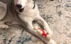 No One Steals This Doggo's Toys, NO ONE