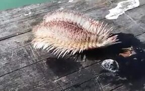 Creatures Of The Sea Can Be Weird And Scary