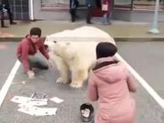 Amazing Street Art Of A Polar Bear!