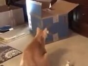 Cats Do Literally Fight Over Nothing!