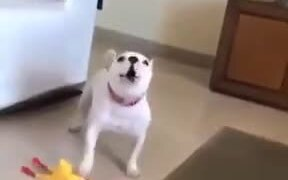 Dog Plays With The Dreaded Rubber Chicken!