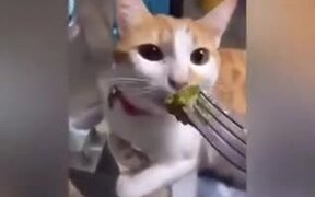 When A Meat Lover Is Given Veggies!