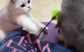 Guy Causes And Outright Brawl Between Two Cats!