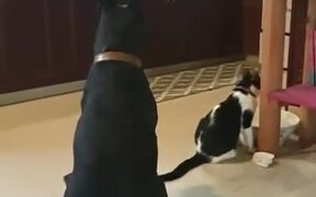 Dog Knows Better Manners Than Most Humans!