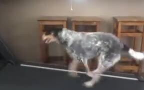 The Fittest Doggo Around For Miles!