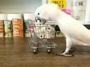 This Bird Has Started To Panic Buy Toilet Paper