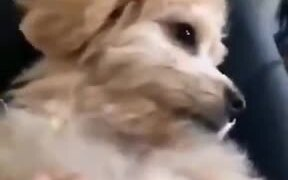 Waking Up Cute Dog With A Boop