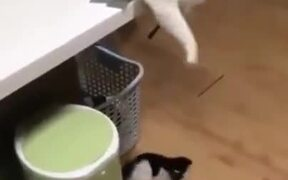 Mom Cat Knows How To Keep The Kitten Entertained