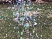 Bubbles On Wet Grass Looks Magical!