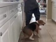 This Dog Dances Better Than You