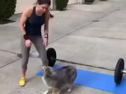 This Doggo Is The Best Workout Buddy