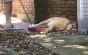 Sleeping Chonky Doggo