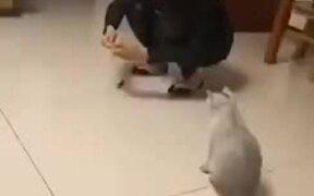 Cat's Literally Jumping Around Like A Kangaroo