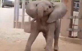 The Cutest Baby Elephant On The Internet!