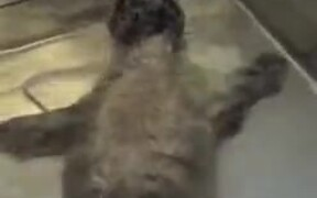 Cute Rescued Baby Seal Takes A Bath!