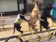 Riding Out With The Dogs!