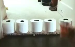 Toilet Paper Rolls, A Laser And A Cat