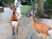 These Deer Are Literally Mugging This Woman