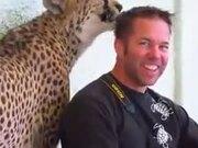 Cheetah Licks A Guy's Hair!