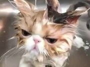Bathing Cats Are The Funniest!