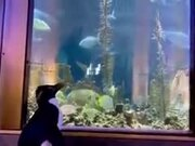 Penguins Get The Free Run Of Aquarium