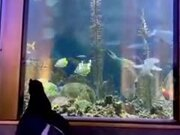 Penguins Get The Free Run Of Aquarium