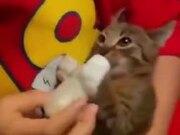 Hungriest Little Kitten Ever!