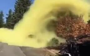 This Is What Pine Pollen Looks Like