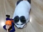 Catto Is In For An Undercover Mission