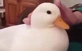 Nicest Little Duck