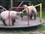 A Bunch Of Sheep Play Around In A Playground