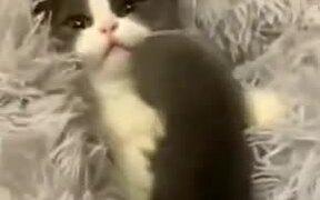 Cutest Peekaboo Video Of A Kitten