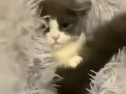 Cutest Peekaboo Video Of A Kitten