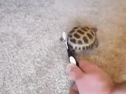 Shake Your Body With Dancing Tortoise