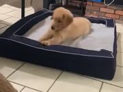 Cute Dog On A Dog Bed