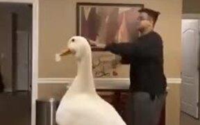 Twerking Duck