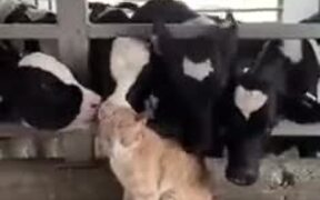 Who Said Cows And Kitties Don't Match?