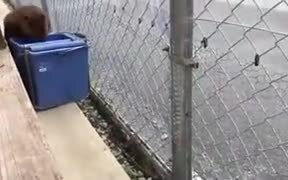 Mr. Beaver Cleaning Human Place